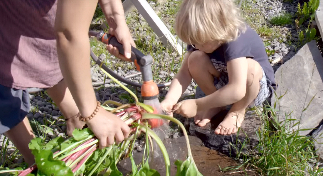 Выращивание экологических продуктов