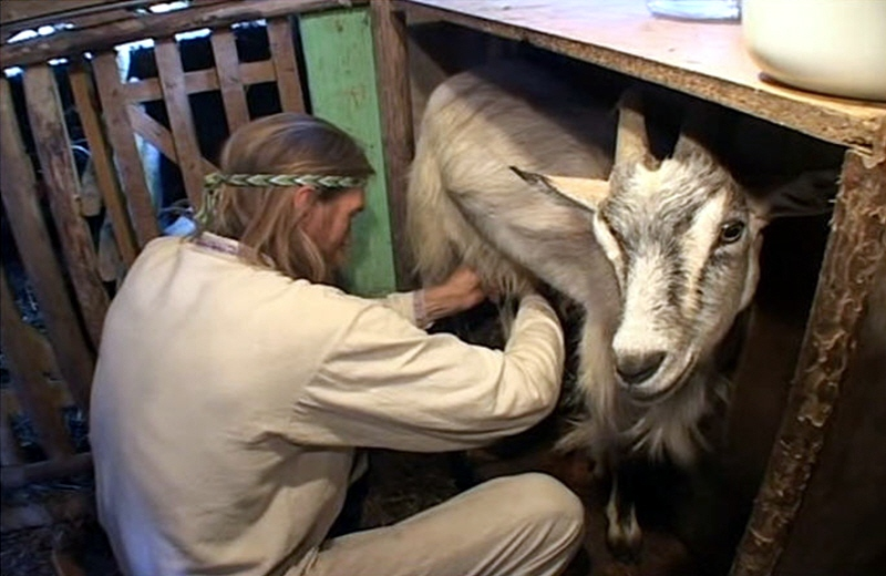 Как доят коз руками