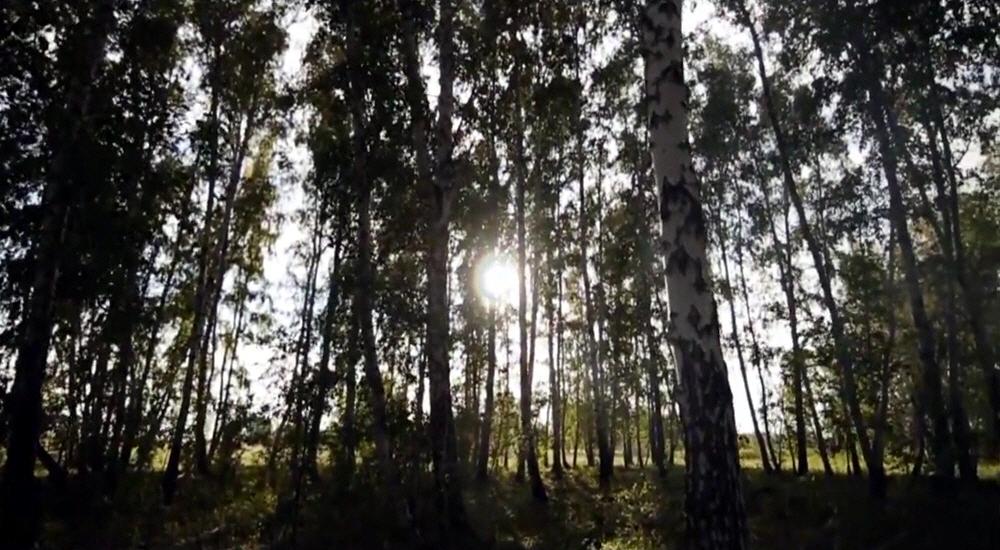 Славянский Ведический Музыкальный клип